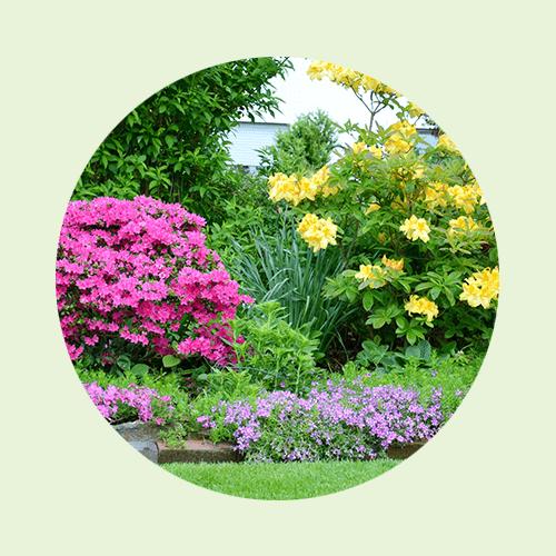 ... für Moorbeetpflanzen