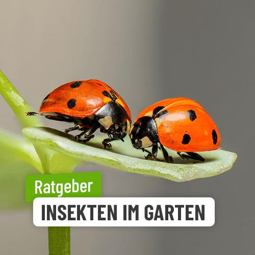 Insekten & Tiere