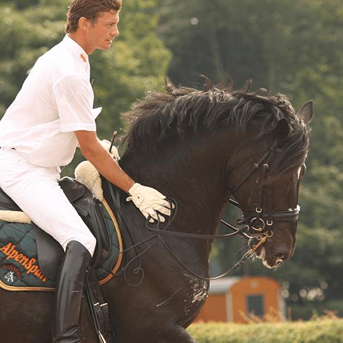 Pferde, Tiere & mehr