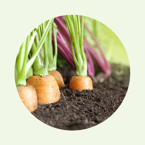 ... für Gemüse und Kräuter