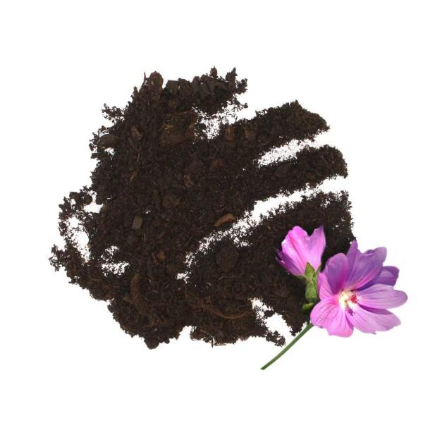 Tommi Geranienerde oben mit Blume